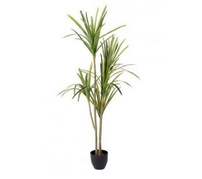 PLANT WITH VASE ANTICIRO