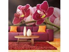 Fotomural - Lindas orquídeas na água