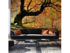 Fotomural - Outono, floresta e folhas