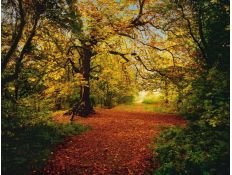 Photomural Autumn Forest
