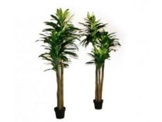 PLANT WITH VASE DULE