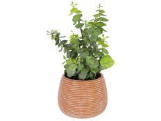 Plant artificial Eucalyptus succulent