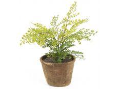 Plant artificial Adiantum
