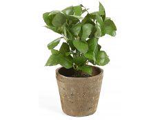 Plant artificial Albahaca