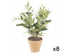 olivos plant set