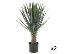 yuca plant set