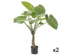 alocasia plant set