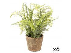 helecho plant set